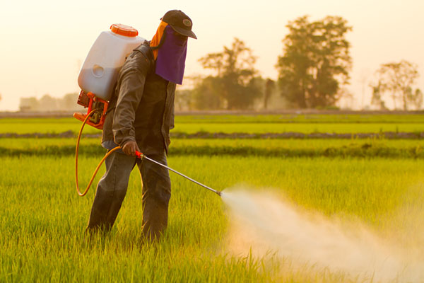 commercial chlorpyrifos pesticide
